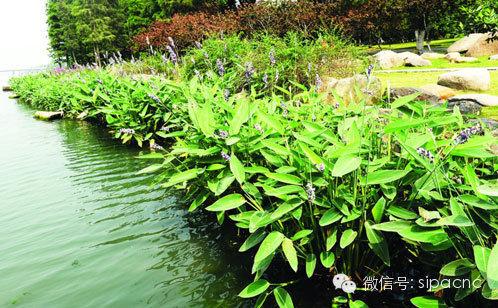 草木茂盛的绿化带-苏城又添氧吧 十里斜塘变身森林公园