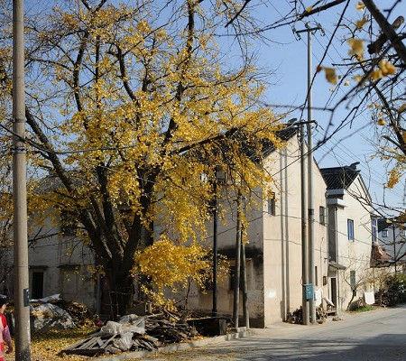 碧螺村位于东山景区,不是很靠近城镇,一个不大不小的村子,一个安安
