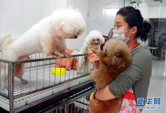 工作人员照顾寄养动物