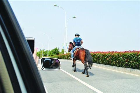 市民骑着高头大马