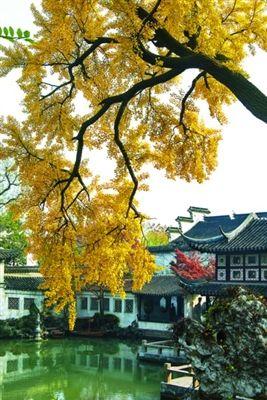 春天40银杏树图片大全