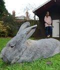 独眼巨兔的幸福生活